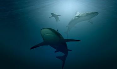 Requin dans l'océan