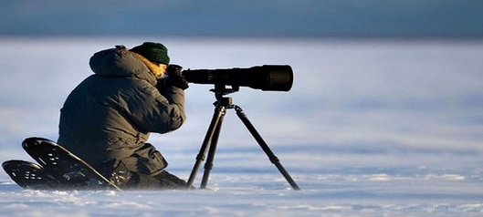 Tourisme Antartique