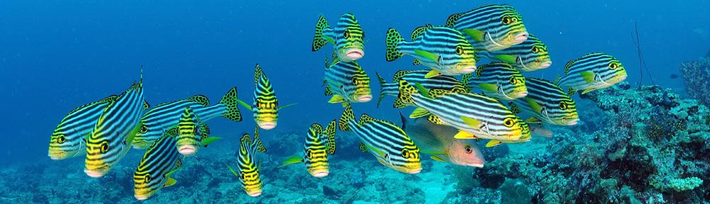 plongee-sous-marine-3-ec